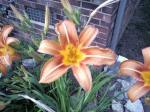 Flowers – cell phone photos – Stephen Kellogg 2009